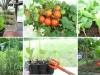 Curso online ensina a fazer horta em casa